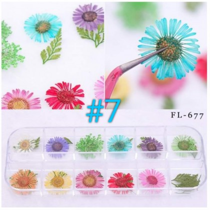 Mixed Natural Dried Flowers (Box)